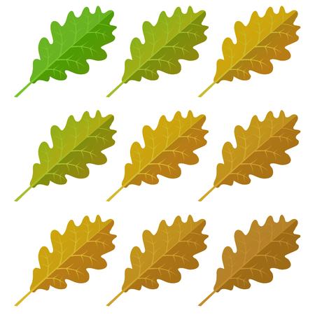 oak leaves: Autumn oak  leaves set, isolated on white background. simple cartoon flat style, vector illustration.