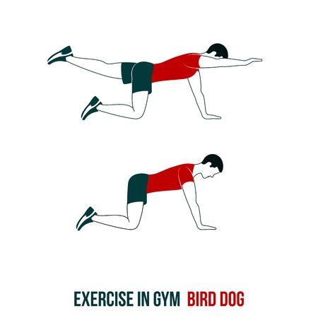 ejercicio aeróbico: Fitness, aeróbic y ejercicios de entrenamiento en el gimnasio. Vector conjunto de iconos de entrenamiento en el estilo plano aislado en el fondo blanco. Vectores