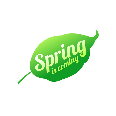 Young green leaf vector logo. Spreeng is comming. Web graphics, banners, advertisements, brochures, business templates Isolated on a white background