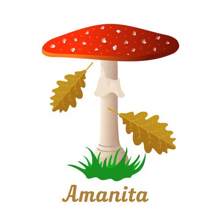 Mushroom amanita single object. Autumn, fallen leaves of trees, dry grass. Mushroom badges, labels, brochures, business templates. Vector illustration isolated on white background Illustration