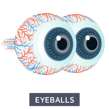Vector flat illustration, big human eyes on white background, medical research. For medical textbooks, teaching aids, design offices of ophthalmologists and optics stores
