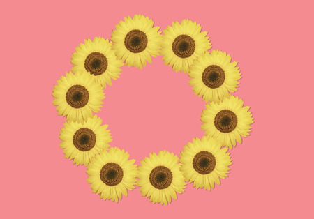 Beautiful sunflower on pink background. Yellow flower frame with copy space. Sunflower pattern