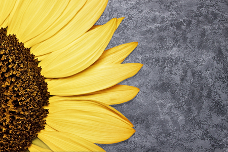 Beautiful sunflower on pink background. Flower backdrop.