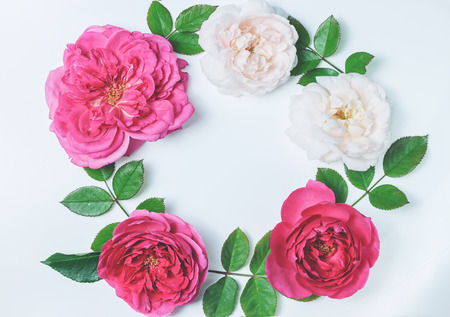 Flowers composition. Frame made of english rose flowers on blue background. Spring, summer, easter concept. Flat lay, top view, copy space
