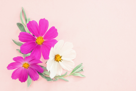 Flowers composition. Colorful kosmey flowers on pink background. Easter, spring, summer concept. Flat lay, top view, copy space 免版税图像