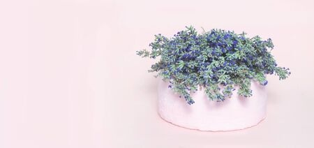 White wedding or birthday cake with lavender flowers on pink background