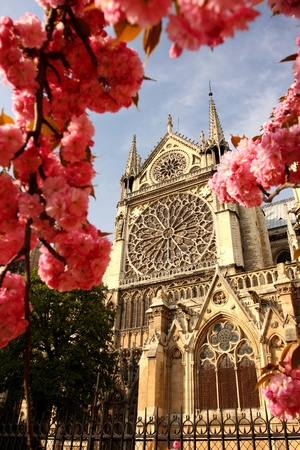 notre dame cathedral: Paris, Notre Dame in spring time, France