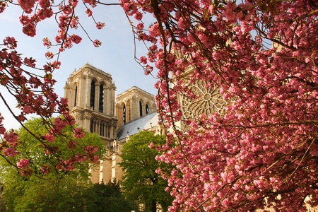 Paris, Notre Dame cathedral with blossomed tree  photo