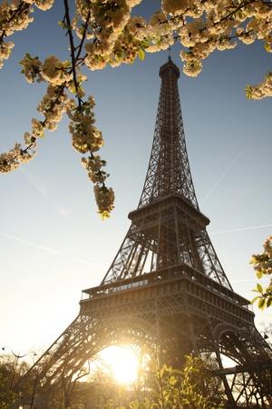 'tour eiffel': Spring morning with Eiffel Tower, Paris, France