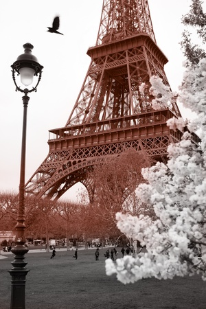 Eiffel Tower in spring time, Paris, France photo