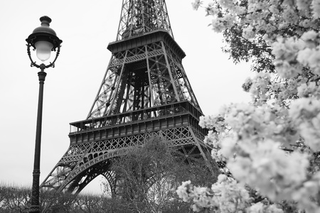 trocadero: Eiffel Tower in black and white style, Paris, France