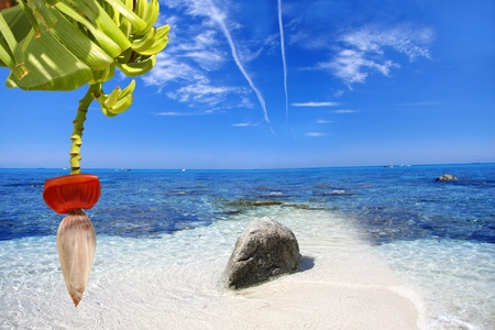 sicily: Beautiful coast of Calabria in Italy