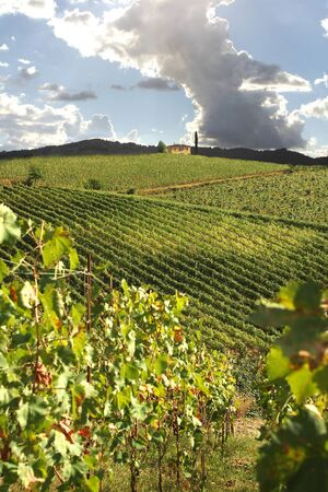 Chianti vineyard landscape in Tuscany, Italy  photo