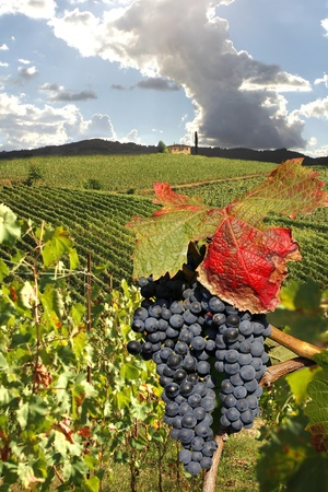 Chianti vineyard landscape in Tuscany, Italy  Stock Photo - 12305672