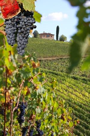 bodegas: Chianti vi�a del paisaje de la Toscana, Italia
