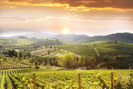wineries: Chianti vineyard landscape in Tuscany, Italy