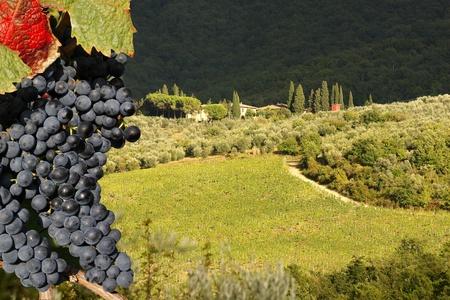 wine road: Chianti vineyard landscape in Tuscany, Italy