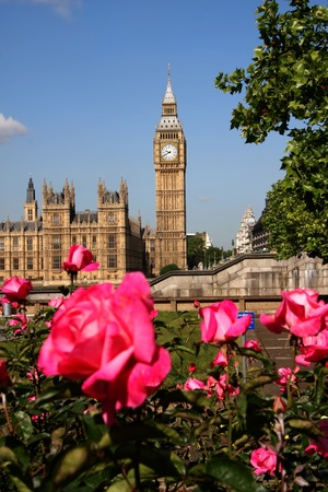 Big Ben with roses in London, UK