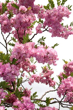 blossom tree photo