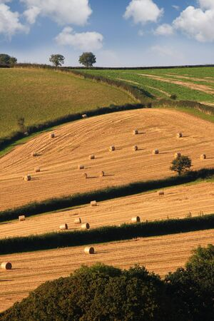 devon: england countryside during harvest