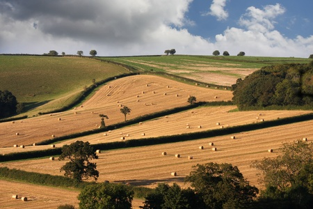 england countryside during harvest photo