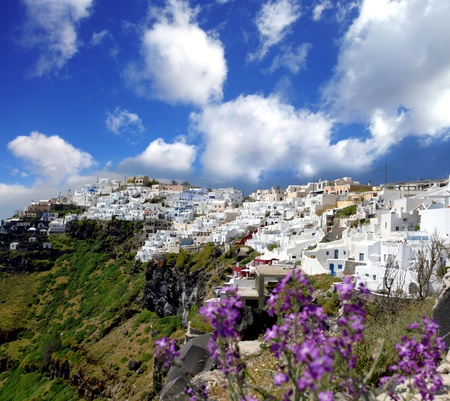 sea flowers: Santorini in spring time with flowers, Fira Town, Greece Stock Photo