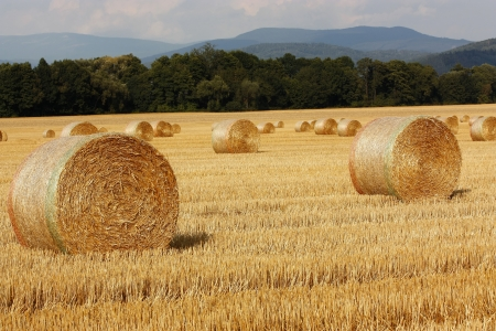 hayloft: Straw bales