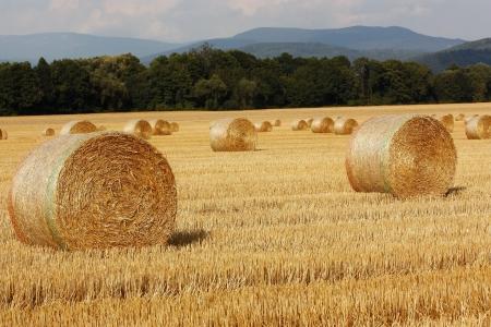 hay bale: Straw bales