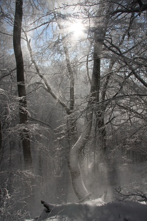 Winter tree with sun rays photo