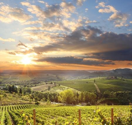 italia: Chianti vineyard landscape in Tuscany, Italy