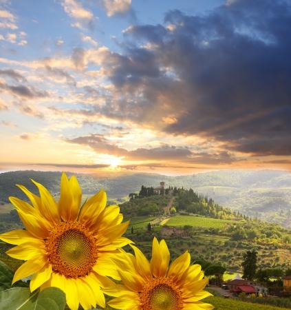 zonnebloem: Chianti wijngaard landschap in Toscane, Itali Stockfoto
