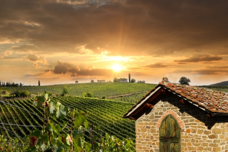 Chianti vineyard landscape in Tuscany, Italy Stock Photo - 17773362