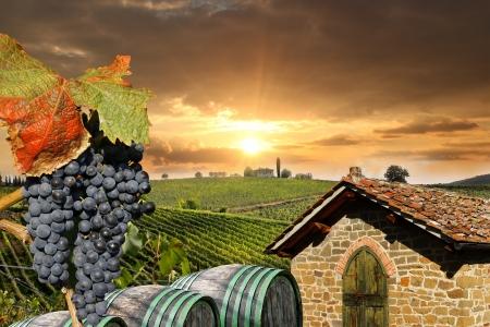 bodegas: Chianti viñedo paisaje en Toscana, Italia
