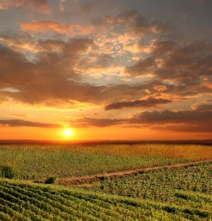 cave: Paysage viticole du Chianti en Toscane, Italie Banque d'images