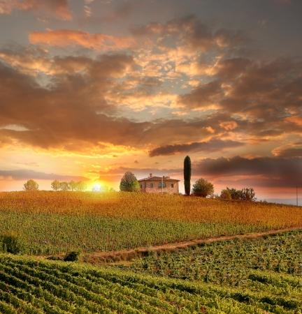 イタリア トスカーナ州キャンティのブドウ園の景色