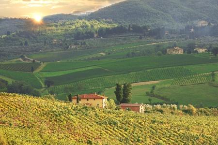Chianti vineyard landscape in Tuscany, Italy photo