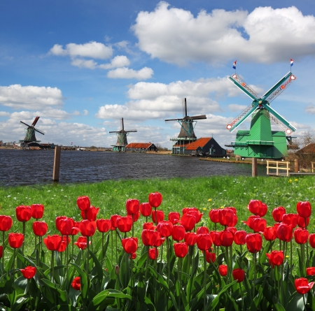 Traditional Dutch windmills with red tulips close the Amsterdam, Holland Stock Photo - 19548739