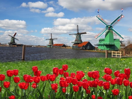 molino: Molinos de viento holandeses tradicionales con tulipanes rojos cerca de Amsterdam, Holanda Foto de archivo