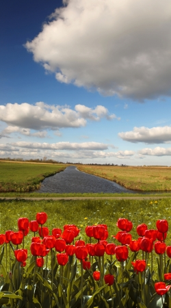 Amazing Holland landscape with red tulips against canal and bike route, Netherlands photo