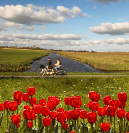 holland landscape: Amazing Holland landscape with red tulips against canal and bike route, Netherlands