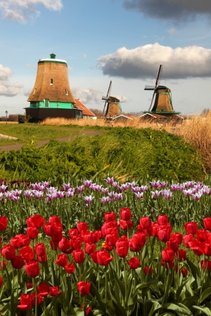 Traditional Dutch windmills with red tulips close the Amsterdam, Holland Stock Photo - 19583855