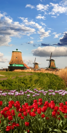 Traditional Dutch windmills with red tulips close the Amsterdam, Holland Stock Photo - 19548742