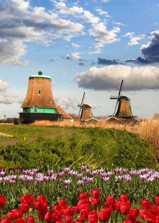 Traditional Dutch windmills with red tulips close the Amsterdam, Holland Stock Photo - 19548712
