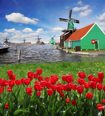 windmolens: Traditionele Nederlandse windmolens met rode tulpen sluit de Amsterdam, Holland