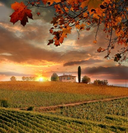 winery: Chianti vineyard landscape in Tuscany, Italy