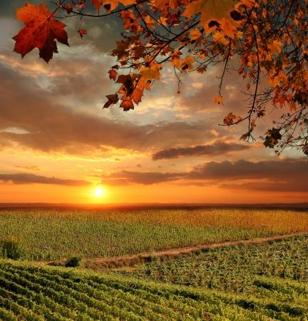 Chianti Weinberg Landschaft in der Toskana, Italien