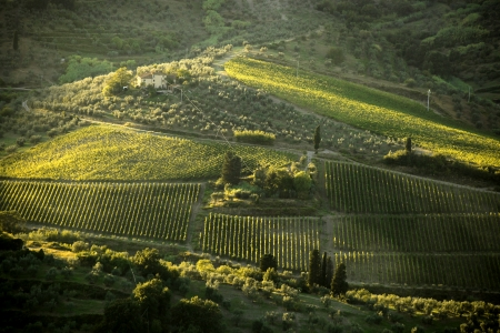 wine cellar: Famous Tuscany vineyards near the Florence in Italy