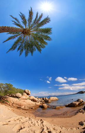 tropical beach with palm tree photo