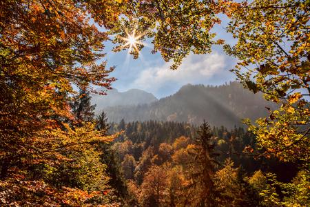 Autumn forest again sunrise in Bavaria Alps, Germany photo
