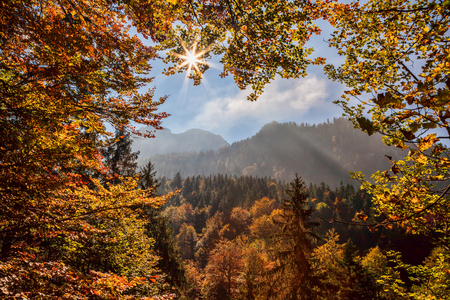 nature background: Autumn forest again sunrise in Bavaria Alps, Germany